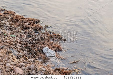 Pieces of tinfoil discarded in a local river laying next to the shore