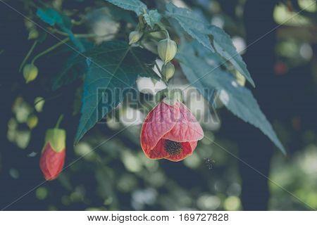 bee swarm red flower in my garden