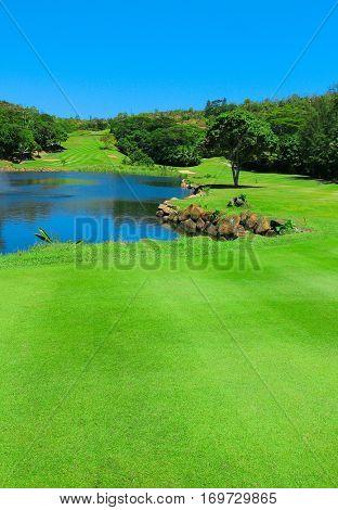 Fairway Golf Grass