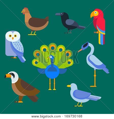 Birds vector set. Colorful wildlife nature collection. Cartoon wing flying animal cute drawing silhouette. Wild fly color bird character illustration.