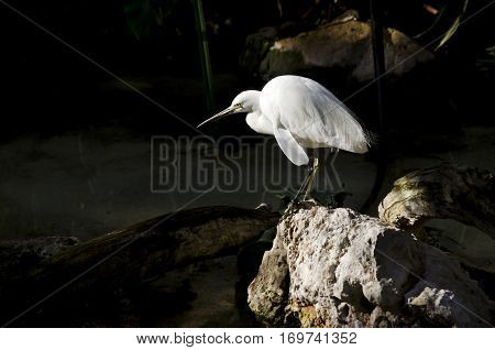 the egret is standing in the light