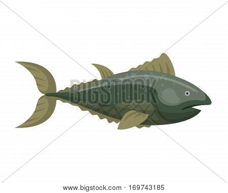 Fish redfin nature animal seafood vector illustration. Mediterranean nutrition fishing and meat preparation. Water dorado fresh raw meal underwater.