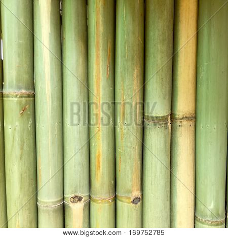 bamboo nature background wallpaper line nature line