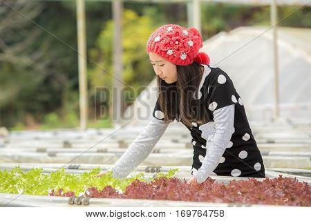 Beautiful woman in hat enjoying like Organic vegetable Greenhouse hydroponic summer outdoors in Organic vegetable garden.