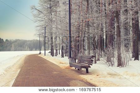 Winter park background. Beautiful landscape theme of natural park or outdoors.