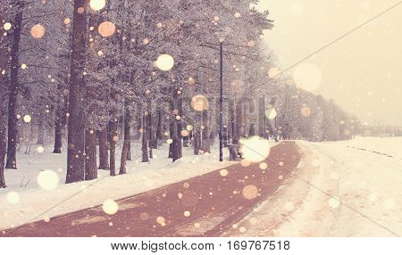 Snowfall in park. Bright winter sunrise. Beautiful winter theme. Snowflakes illuminated by rising sun. Christmas theme.