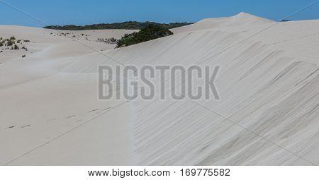 Big What Sand Dune And Native Australian Coastal Vegetation. Little Sahara, Kangaroo Island, South A