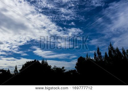Silhouettes Of Tree Against Beautiful Blue Sky With Cloudy