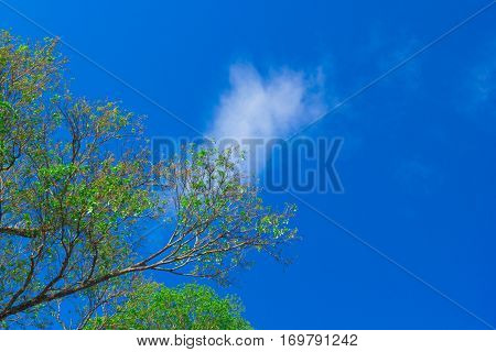 This nature. treetop, blue sky and cloud