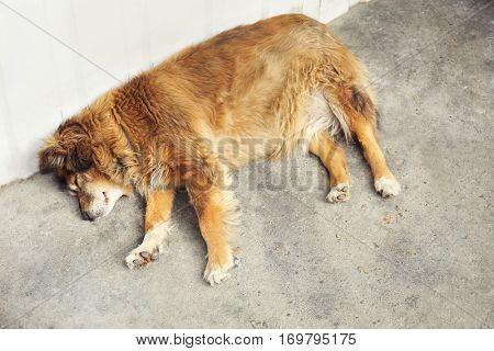 Homeless dog sleeping on the street