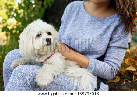 Woman holding cute dog, closeup