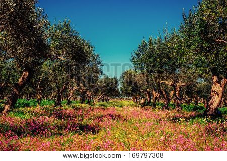 Spring pink flowers. Beauty world. Italy Europe