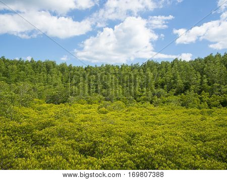 Landscape with green and yellow tiny trees blurred foreground and cloudy skies day
