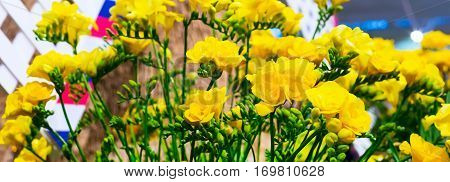 flower close-up bouquet of yellow alstroemeria holiday panoramic banner background