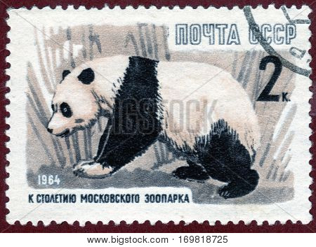 USSR - CIRCA 1964: Postage stamp printed in USSR with a picture of a Panda from the series