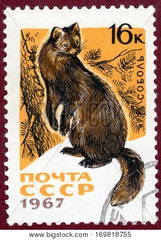 USSR - CIRCA 1967: Postage stamp with a picture of Sable (lat. Martes zibellina), from the series