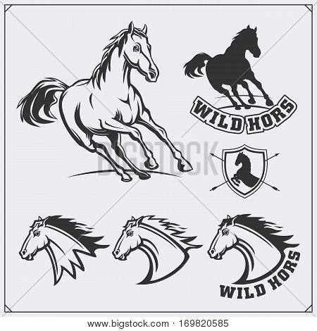 Horse heraldry coat of arms. Labels, emblems and design elements for sport club.