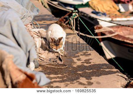hungry stray cat eats the caught sea fish.