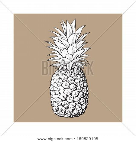 Whole, unpeeled, uncut pineapple, sketch style vector illustration isolated on brown background. Realistic hand drawing of whole fresh, ripe pineapple, side view