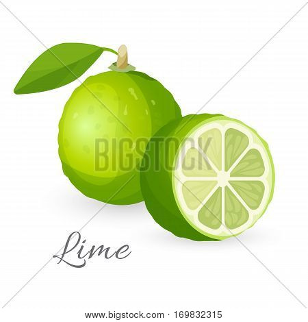 Lime exotic fruit whole and half isolated on white. Green lemon edible citrus hybrid called kaffir or dessert lime. Excellent source of vitamin C, realistic vector illustration