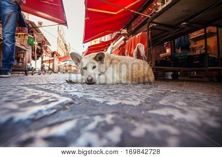Red homeless dog lying on the market square background. Cute lonely pet looking forward. Adorable canine on the ground