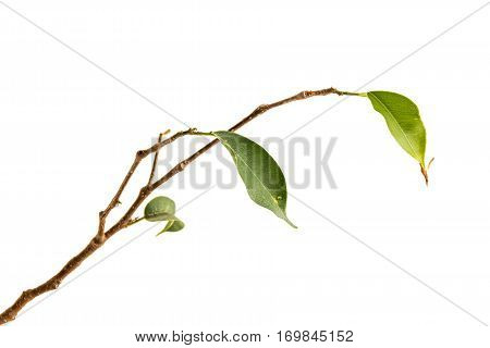 Twigs And Green Leaves Of  Plant Struggling For Survival