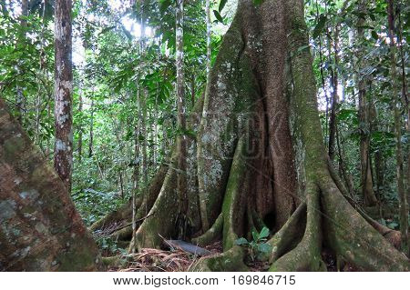Amazon Forest In The Madidi National Park, Bolivia