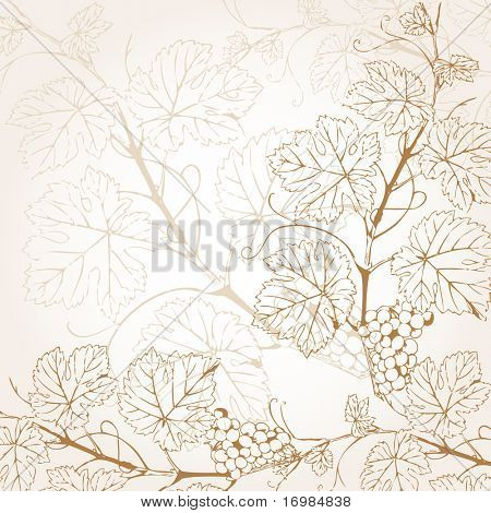 Vintage vector illustration with grape branch