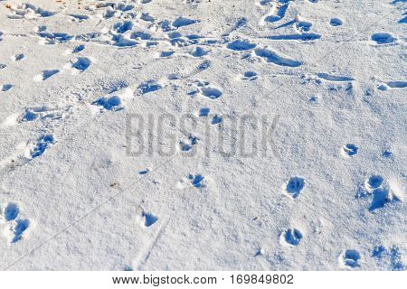 drifts of white snow and footprints of animals and humans