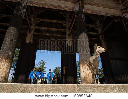 Nara, Japan - March 11, 2013: Deer standing under big wooden gates at the entrance to Todaiji temple in Nara
