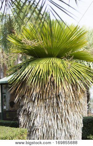 Unusual palm trees grow in very unusual park