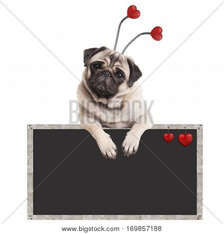 cute pug puppy dog hanging on blank blackboard promotional sign isolated on white background