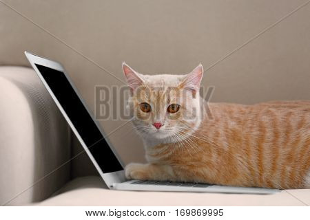 Cute cat with laptop on coach