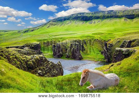 White thoroughbred horse resting in the green grass. The striking canyon in Iceland. Bizarre shape of cliffs surround the stream with glacial water. The Icelandic Tundra in July