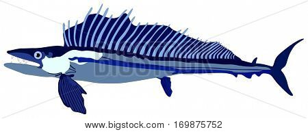 Vector Lancet Fish lives is ocean and under deep blue water life one of top sea predators