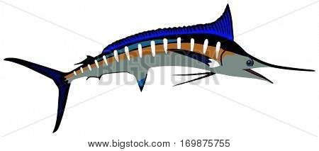 Vector Marlin Fish lives is ocean and under deep blue water life one of top sea predators