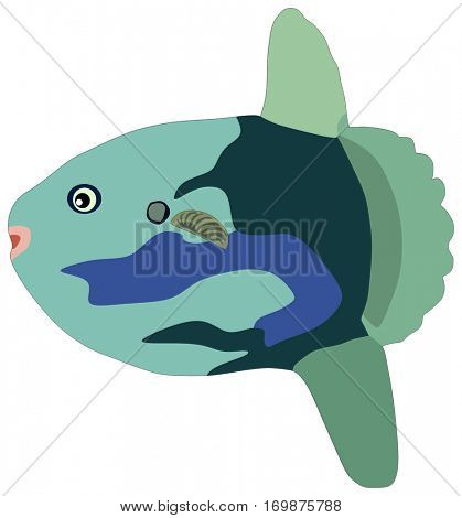 Vector Sunfish Fish lives is ocean and under deep blue water life one of sea filterers