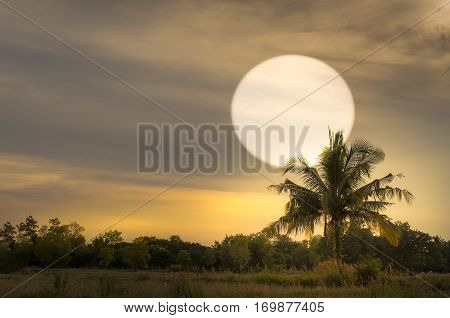 sun set with coconut tree silhouet in oblique angle