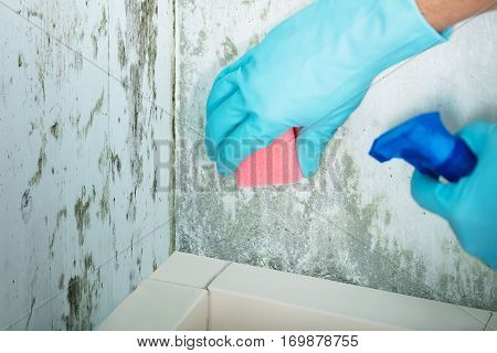 Close-up Of A Person Hand Cleaning Mold From Wall Using Spray Bottle And Sponge