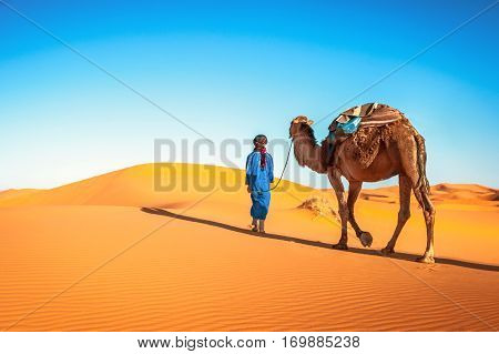 Camel caravan going through the sand dunes in the Sahara Desert. Morocco Africa. Beautiful sand dunes in the Sahara desert.
