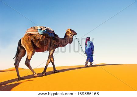 Camel caravan going through the sand dunes in the Sahara Desert. Morocco Africa