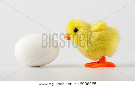 Baby Chicken Looking At Egg