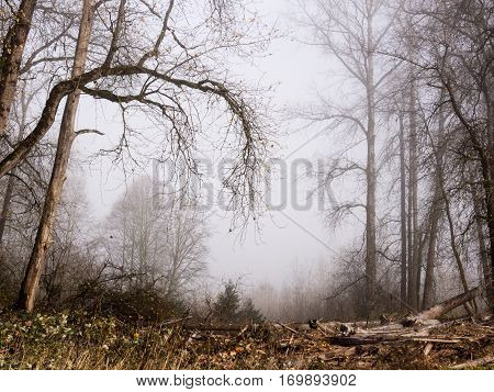 Mystic forest in the Pacific Northwest - near the town of Carnation, WA, USA