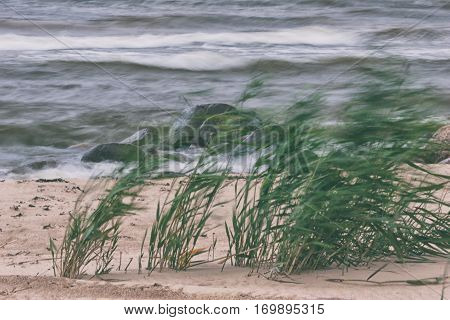 Green cane on the sandy beach swaying in a strong wind against the waves of the sea and of rocks in water