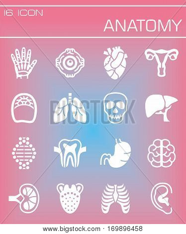 Vector Anatomy icon set on rose background