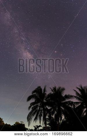 The milky way over plam coconut tree in night sky.