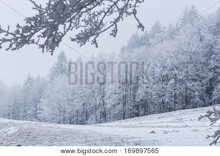Beautiful winter landscape with snowy trees in mountains