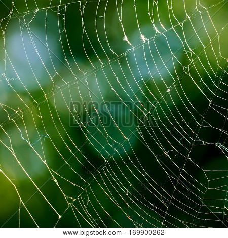 Spiderweb on background of green leaves.