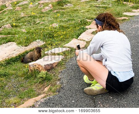 Rocky Mountain National Park USA - July 14 2015: Girl taking picture of marmot with cellphone in Rocky Mountain National Park