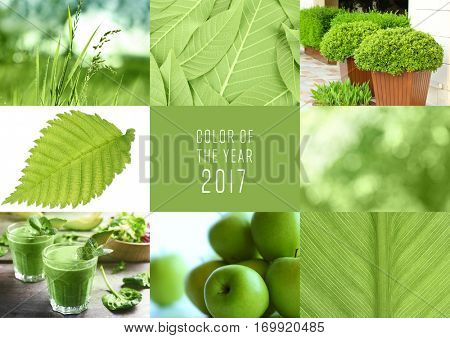 Trendy color concept. Set with greenery color. Text COLOR OF THE YEAR 2017 on background